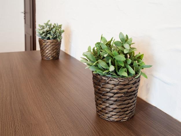Deux plantes dans des pots en osier dans la chambre