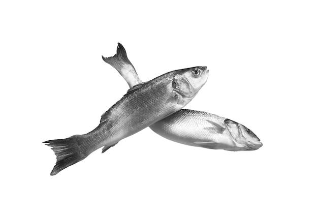 Deux poissons de bar crus isoalted sur espace blanc