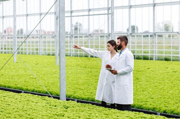 Deux recherches homme et femme examinent la verdure avec une tablette dans une serre blanche