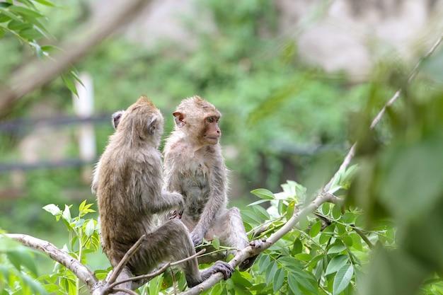Deux singes eau humide sur un arbre