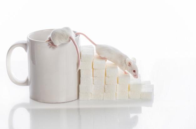 Deux souris blanches rampant dans les escaliers depuis les cubes de sucre et une tasse, concept de diabète