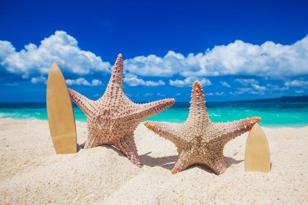 Deux surfeurs étoiles de mer sur le sable de la plage tropicale aux philippines