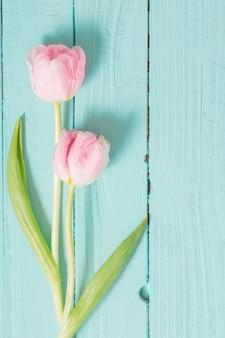 Deux tulipes sur fond en bois de menthe bleue