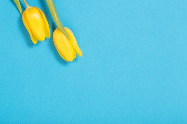 Deux tulipes jaunes sur fond bleu
