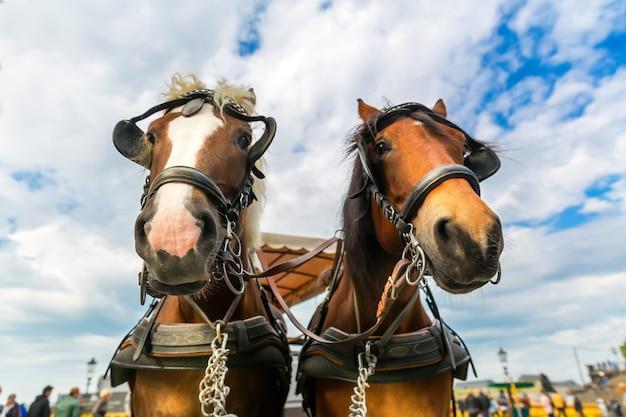 Deux visages de chevaux de tournée dans la vieille ville européenne