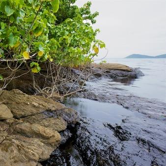 Déversement de pétrole brut sur la pierre à la plage