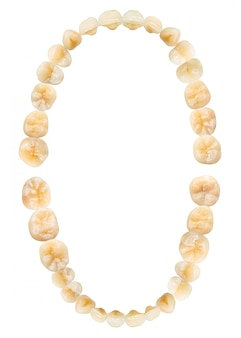 Diagramme de la dent (