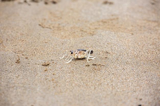 Dick cricket ou schizodactylus salweenensis est décrit comme étant endémique de la rivière salween,