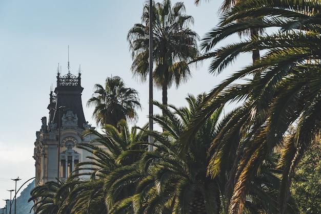 Différentes espèces de palmiers dans une avenue urbaine