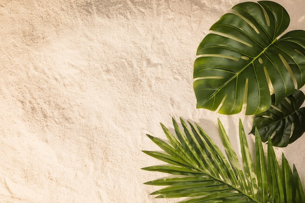 Différentes feuilles sur le sable