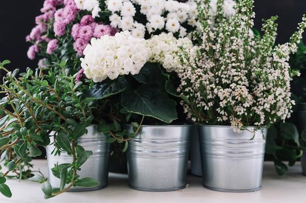 Différentes fleurs fraîches en pot