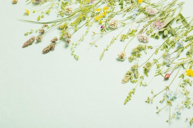 Différentes fleurs sauvages sur fond de papier