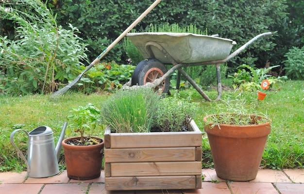 Différentes herbes en pots