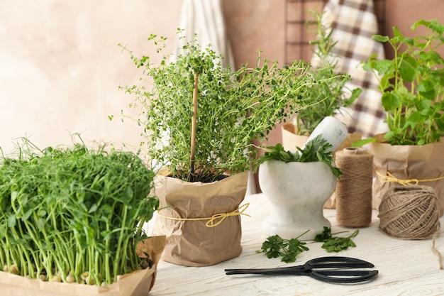 Différentes herbes sur table en bois blanc sur fond marron