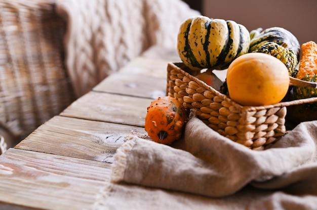 Différentes mini citrouilles de thanksgiving sur une table en bois rustique.