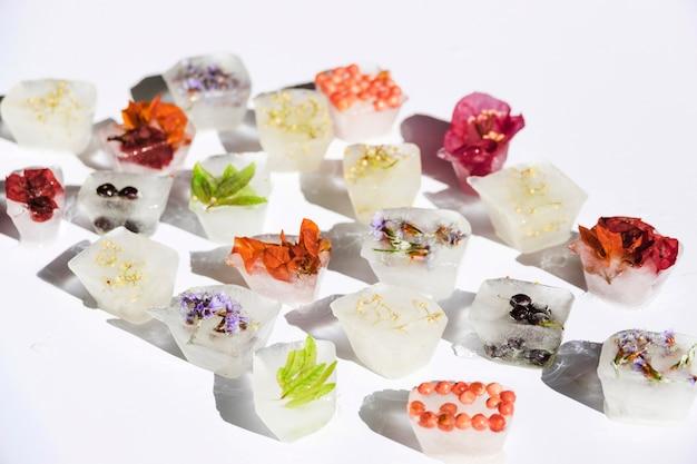 Différentes plantes dans des blocs de glace
