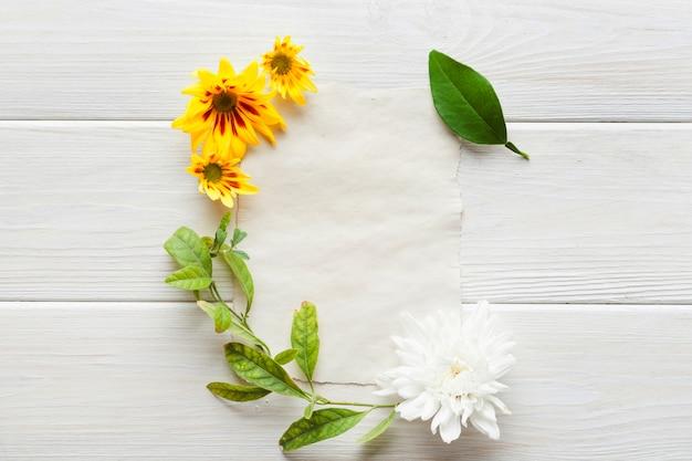 Différentes plantes sur papier