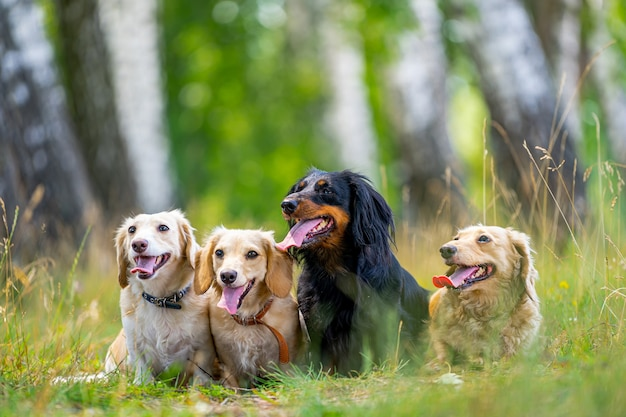 Différentes races de chiens sont assises en ligne sur fond de nature. des animaux mignons marchent.