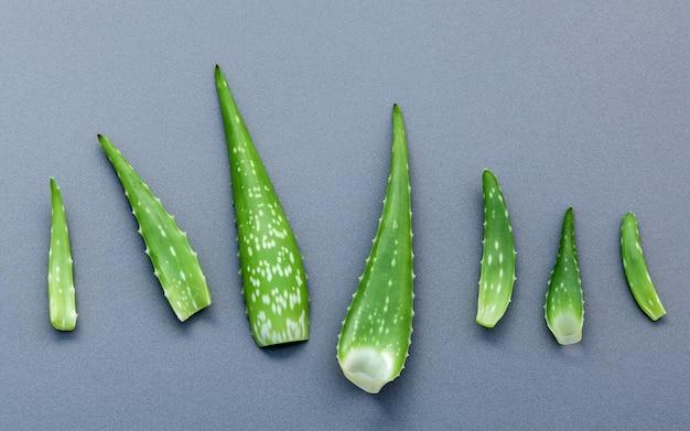 Différentes tailles de feuilles d'aloe vera sur fond gris avec espace plat et copie.