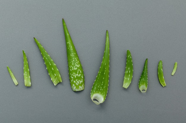 Les différentes tailles de feuilles d'aloe vera sur fond gris.
