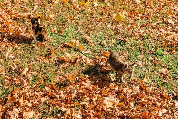 Différents chats sans-abri dans un parc de la ville en automne