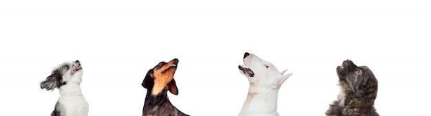 Différents chiens regardant la caméra