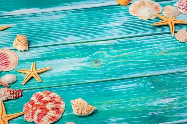 Différents coquillages sur bois de couleur