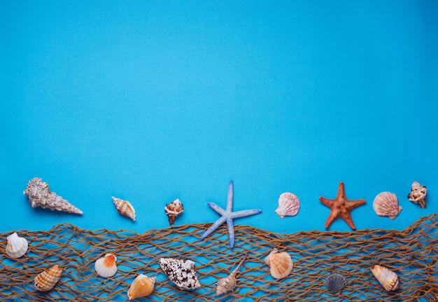 Différents coquillages et résille sur fond bleu