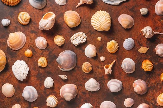 Différents coquillages sur une table en bois marron