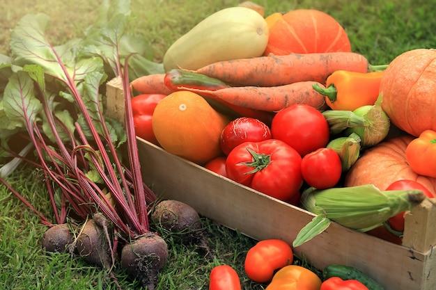 Différents légumes et fruits multicolores dans un panier debout sur le sol juteux
