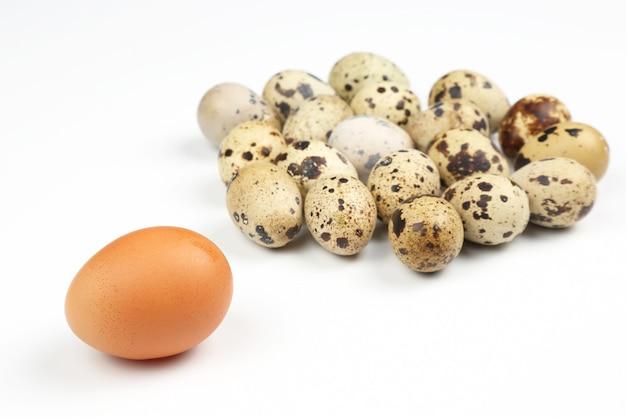 Différents œufs de poule sur fond blanc