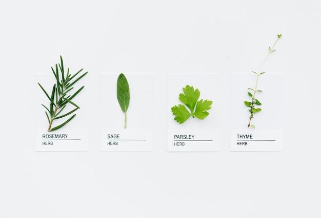 Différents types d'herbes