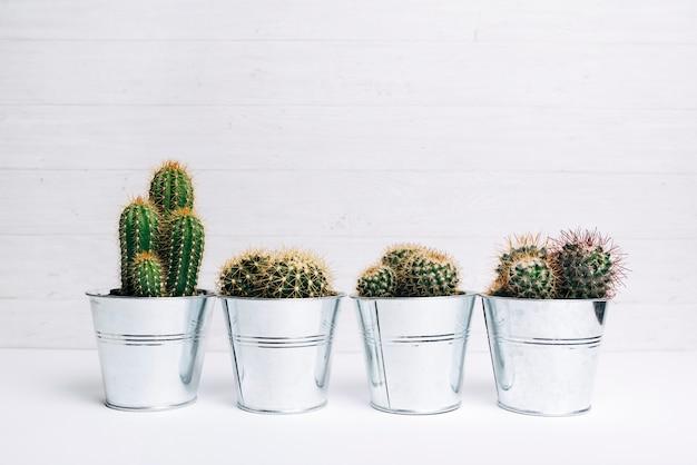 Différents types de parcelles de plantes succulentes sur un bureau blanc
