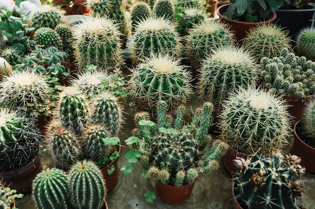 Différents types de plantes succulentes enrichies