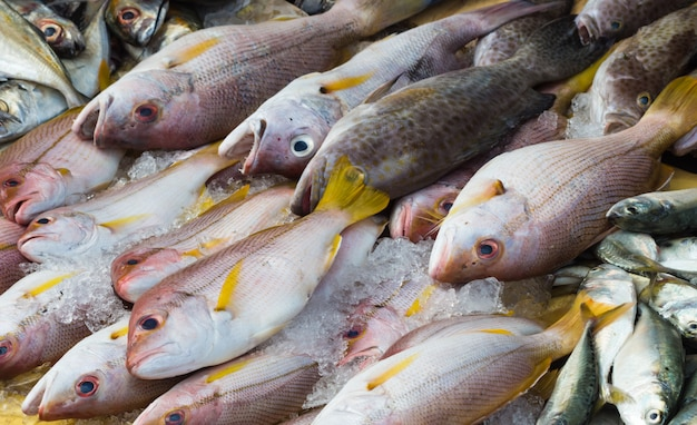 Différents types de poissons sur la glace