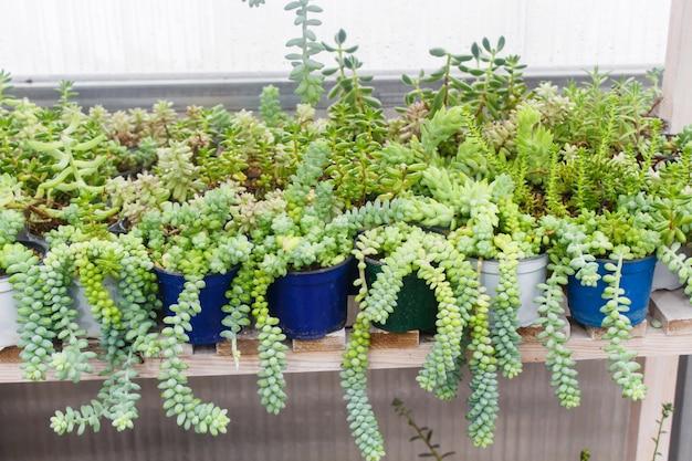 Différents types de succulentes dans des pots de fleurs dans la serre