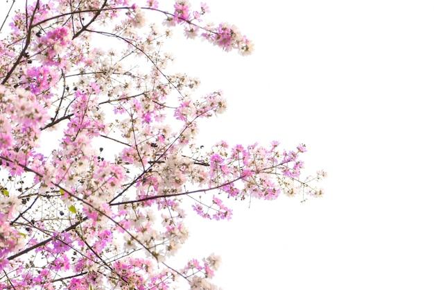 Direction de la belle fleur rose