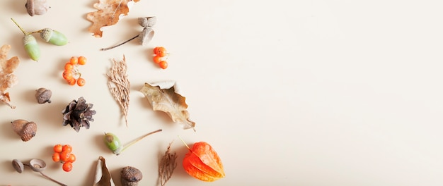 Disposition d'automne de sorbier, de glands, de feuilles mortes, de cônes. copier le format de la bannière de l'espace