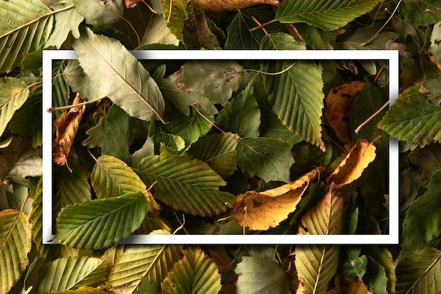 Disposition créative de couleur blanche faite de feuilles. fond de feuilles vertes, jaunes et oranges avec note de carte de papier de cadre vide blanc. mise à plat.récolte d'automne.vue de dessus.