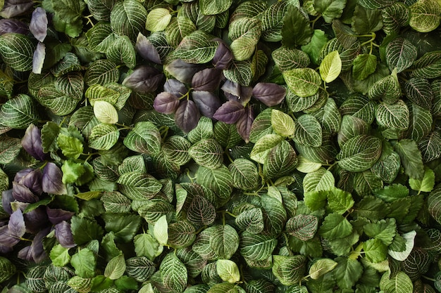 Disposition créative faite de feuilles vertes. flat lay. concept nature