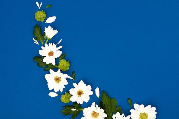 Disposition créative avec des fleurs blanches et des feuilles vertes sur un espace bleu. concept de printemps. mise à plat, vue de dessus.