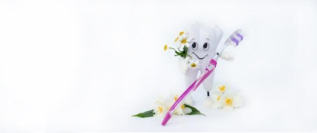 Disposition des dents dentaires. bannière de soins bucco-dentaires des dents saines