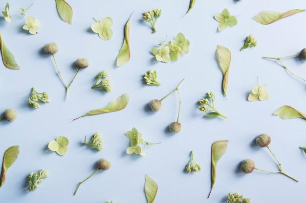 Disposition du motif de plantes vertes sur un thème floral sur fond bleu