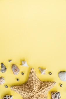 Disposition des étoiles de mer près des coquillages