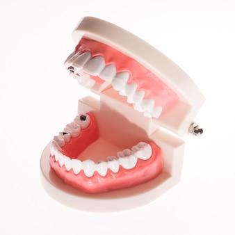 Disposition de la mâchoire dentaire de formation sur un fond blanc