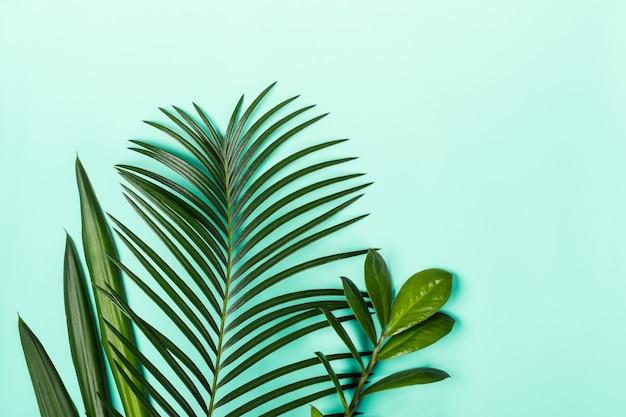 Disposition minimaliste naturelle faite de feuilles tropicales, espace de copie.