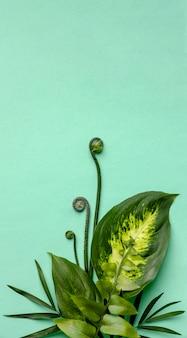 Disposition à plat de feuilles vertes avec espace copie