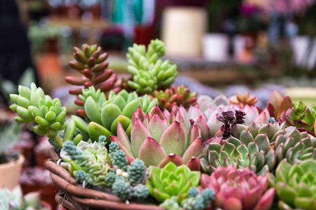 Disposition rectangulaire de succulentes; succulents de cactus dans un planteur