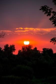 Disque solaire lumineux au-dessus d'arbres au lever du soleil