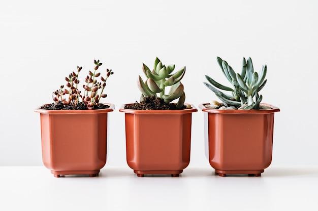 Divers cactus et plantes succulentes en pots